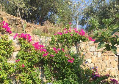 vakantiehuis_casa-bloemen